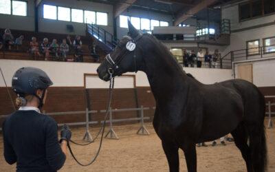 Vill du lära dig mer om SWBs unghästtester?